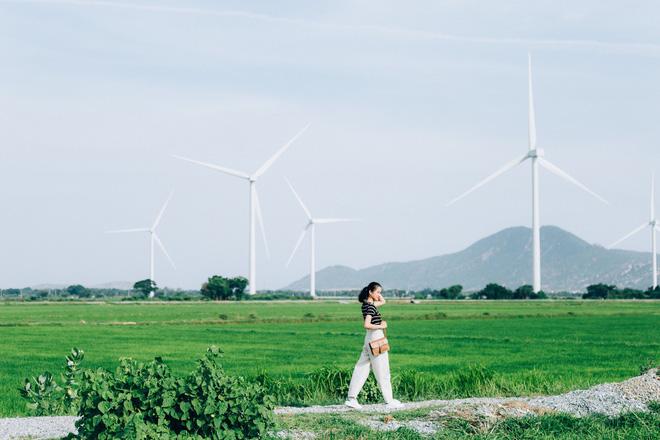 Cánh đồng quạt gió và vườn dâu Ba Mọi tại Ninh Thuận: Hai địa điểm check-in siêu to khổng lồ, lại còn miễn phí nữa chứ! - Ảnh 3.