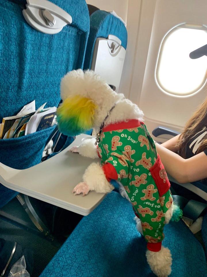 Đăng ảnh chú chó cưng hớn hở khi đi du lịch bằng máy bay, cô nàng được dân tình đua nhau vào hỏi làm cách nào để được như thế? - Ảnh 5.