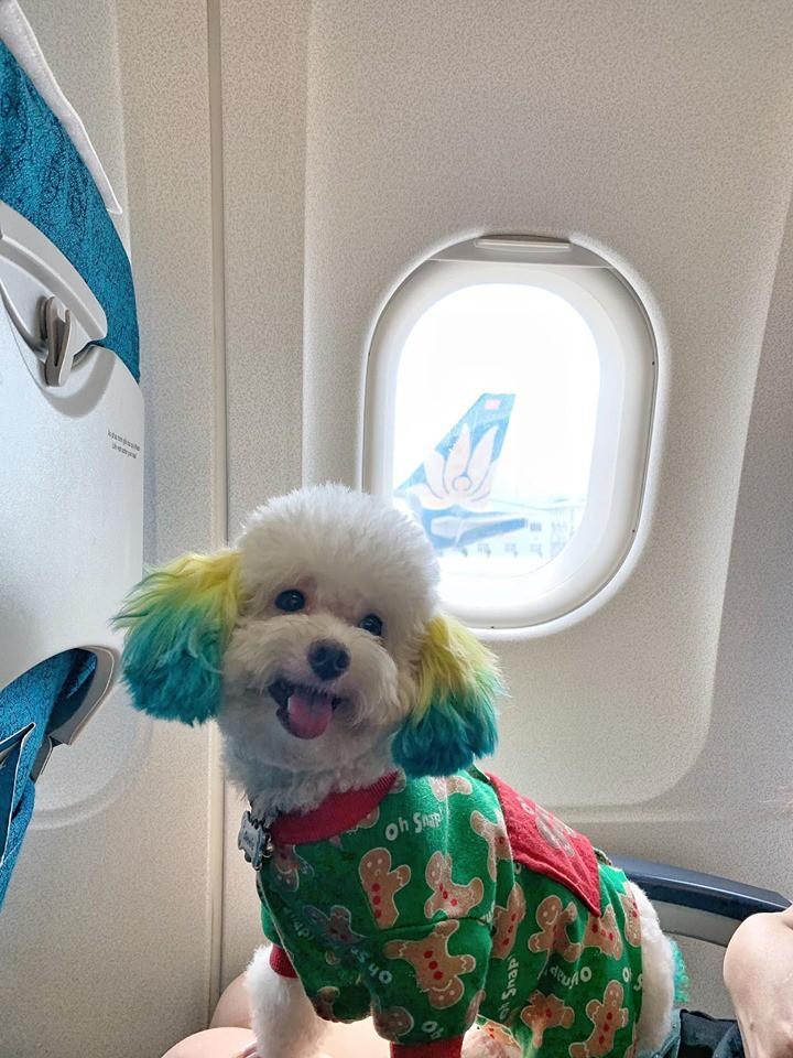 Đăng ảnh chú chó cưng hớn hở khi đi du lịch bằng máy bay, cô nàng được dân tình đua nhau vào hỏi làm cách nào để được như thế? - Ảnh 7.