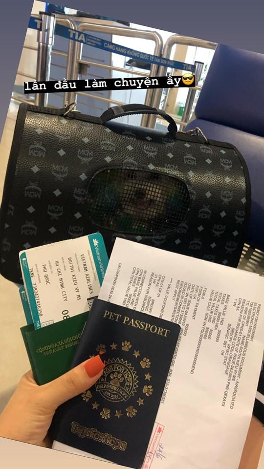 Đăng ảnh chú chó cưng hớn hở khi đi du lịch bằng máy bay, cô nàng được dân tình đua nhau vào hỏi làm cách nào để được như thế? - Ảnh 2.