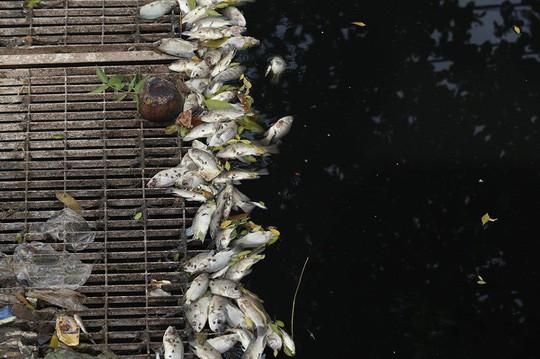 Hà Nội xả nước cuốn trôi toàn bộ kết quả thí nghiệm của chuyên gia Nhật ở sông Tô Lịch - Ảnh 2.