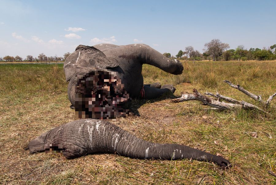 Tấm hình này đã bóc trần sự tàn nhẫn của nạn săn trộm thú hiếm, và nó đang khiến cả thế giới phẫn nộ - Ảnh 2.
