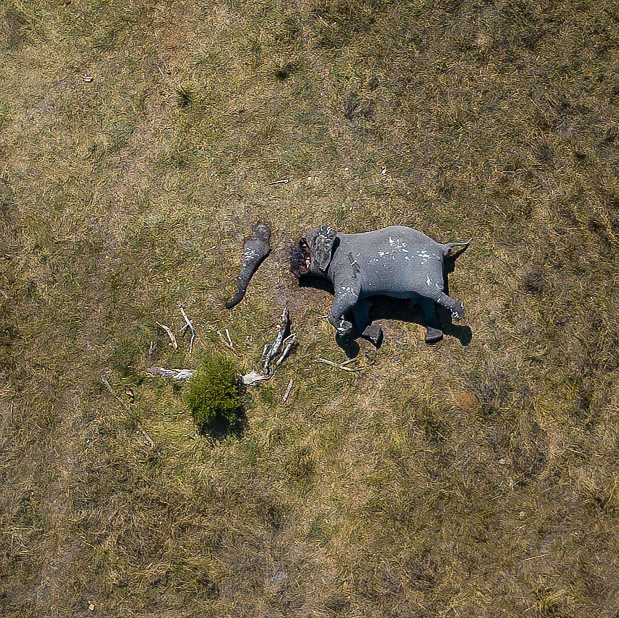 Tấm hình này đã bóc trần sự tàn nhẫn của nạn săn trộm thú hiếm, và nó đang khiến cả thế giới phẫn nộ - Ảnh 1.