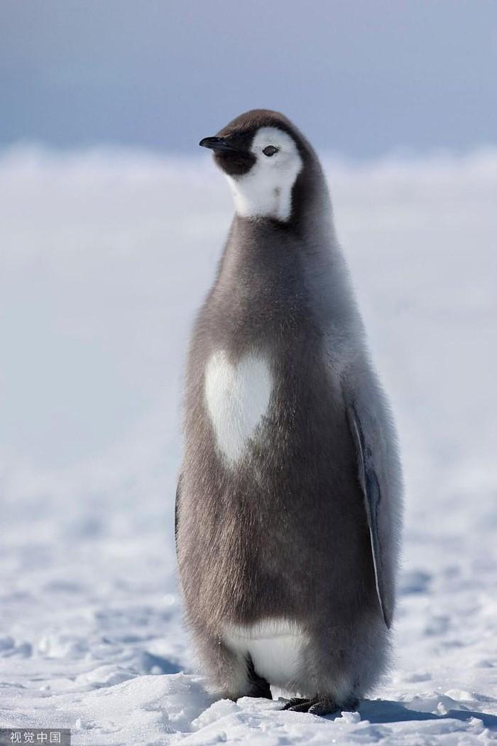 'Yêu khôn xiết' cảnh tình yêu khắp thế giới động vật, tự nhiên
