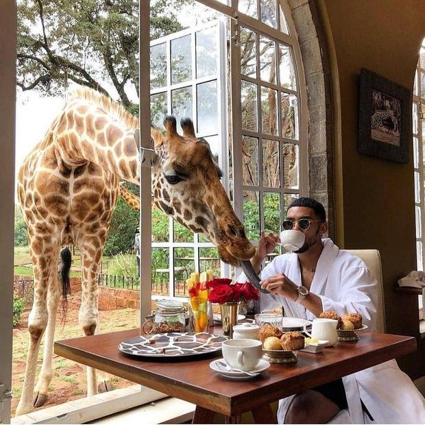 """Khách sạn nổi tiếng nhất châu Phi vì cho du khách ăn sáng cùng hươu cao cổ: Dễ thương thật, nhưng cái giá thì """"chát"""" quá! - Ảnh 13."""