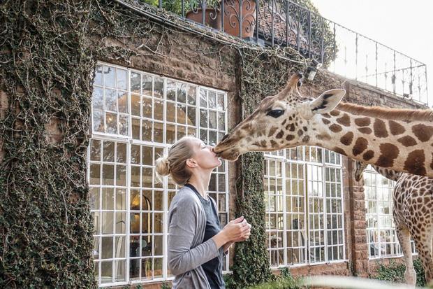 """Khách sạn nổi tiếng nhất châu Phi vì cho du khách ăn sáng cùng hươu cao cổ: Dễ thương thật, nhưng cái giá thì """"chát"""" quá! - Ảnh 11."""