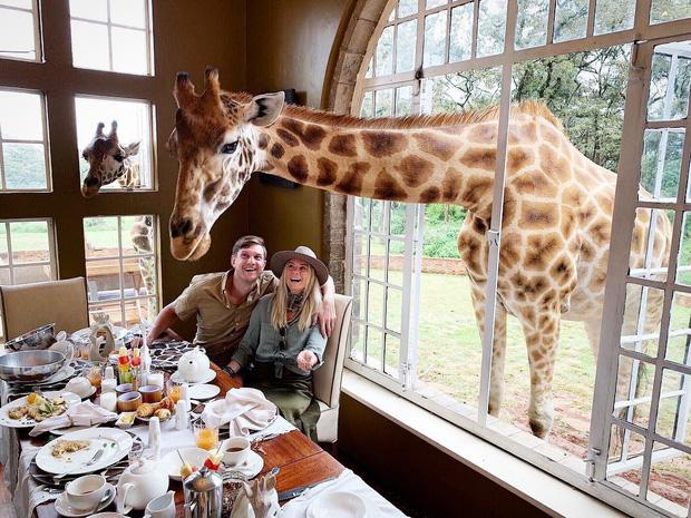 """Khách sạn nổi tiếng nhất châu Phi vì cho du khách ăn sáng cùng hươu cao cổ: Dễ thương thật, nhưng cái giá thì """"chát"""" quá! - Ảnh 17."""