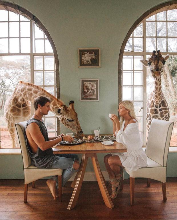 """Khách sạn nổi tiếng nhất châu Phi vì cho du khách ăn sáng cùng hươu cao cổ: Dễ thương thật, nhưng cái giá thì """"chát"""" quá! - Ảnh 14."""
