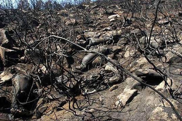 """Những """"đám cháy"""" fake news trên Facebook: Thương rừng Amazon bằng sự thật, đừng mua nước mắt người đọc - Ảnh 4."""