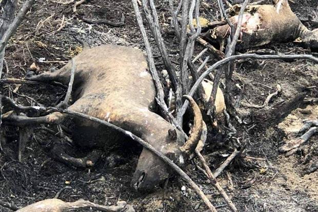 """Những """"đám cháy"""" fake news trên Facebook: Thương rừng Amazon bằng sự thật, đừng mua nước mắt người đọc - Ảnh 1."""