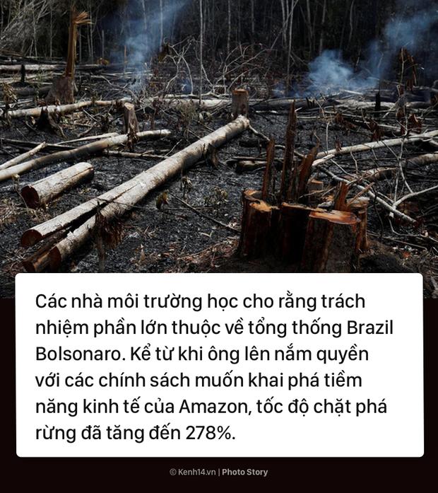 Toàn cảnh thảm hoạ cháy rừng Amazon khiến cả thế giới bàng hoàng - Ảnh 11.