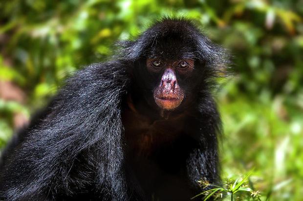 10% loài động vật trên hành tinh như sống trong hỏa ngục vì cháy rừng Amazon: Hậu quả đáng sợ hơn bất kì vụ cháy rừng nào khác - Ảnh 7.