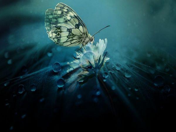 Càng lo sợ điều gì, điều đó càng dễ xảy ra...