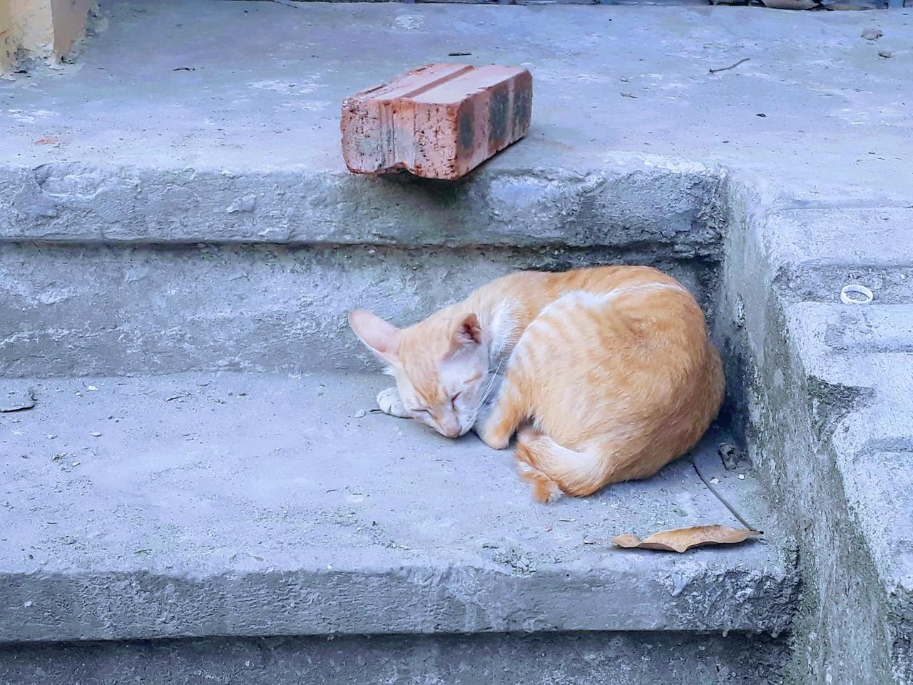 Mèo và người, người và mèo, và tình yêu