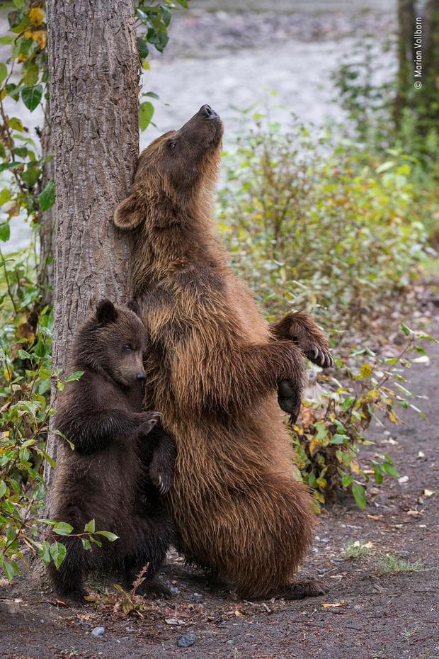 Chiêm ngưỡng những đề cử ấn tượng dành cho giải thưởng nhiếp ảnh thế giới hoang dã của năm do Bảo tàng Lịch Sử Tự Nhiên lựa chọn - Ảnh 3.