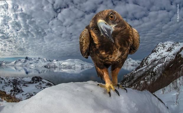 Chiêm ngưỡng những đề cử ấn tượng dành cho giải thưởng nhiếp ảnh thế giới hoang dã của năm do Bảo tàng Lịch Sử Tự Nhiên lựa chọn - Ảnh 21.
