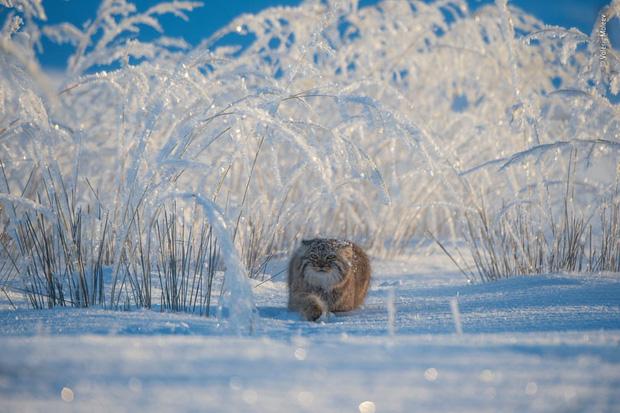Chiêm ngưỡng những đề cử ấn tượng dành cho giải thưởng nhiếp ảnh thế giới hoang dã của năm do Bảo tàng Lịch Sử Tự Nhiên lựa chọn - Ảnh 1.