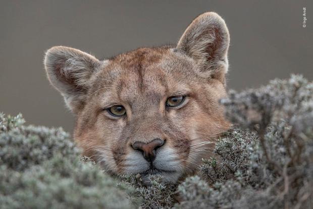 Chiêm ngưỡng những đề cử ấn tượng dành cho giải thưởng nhiếp ảnh thế giới hoang dã của năm do Bảo tàng Lịch Sử Tự Nhiên lựa chọn - Ảnh 4.
