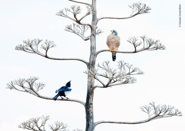 Chiêm ngưỡng những đề cử ấn tượng dành cho giải thưởng nhiếp ảnh thế giới hoang dã của năm do Bảo tàng Lịch Sử Tự Nhiên lựa chọn - Ảnh 15.