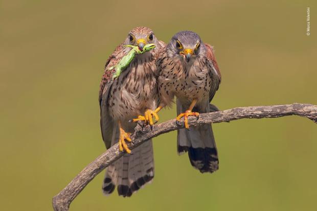 Chiêm ngưỡng những đề cử ấn tượng dành cho giải thưởng nhiếp ảnh thế giới hoang dã của năm do Bảo tàng Lịch Sử Tự Nhiên lựa chọn - Ảnh 23.
