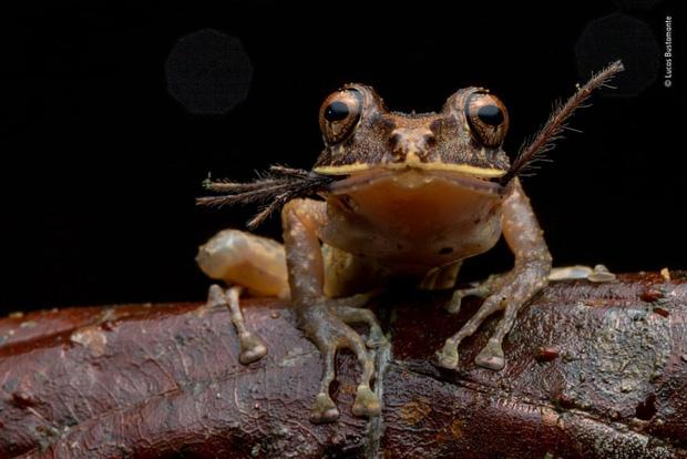 Chiêm ngưỡng những đề cử ấn tượng dành cho giải thưởng nhiếp ảnh thế giới hoang dã của năm do Bảo tàng Lịch Sử Tự Nhiên lựa chọn - Ảnh 11.