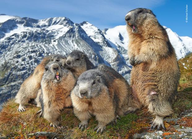 Chiêm ngưỡng những đề cử ấn tượng dành cho giải thưởng nhiếp ảnh thế giới hoang dã của năm do Bảo tàng Lịch Sử Tự Nhiên lựa chọn - Ảnh 8.