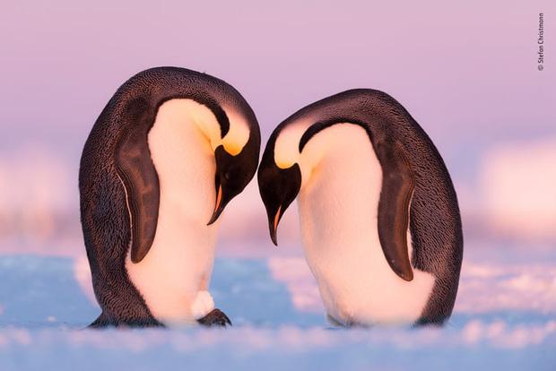 Chiêm ngưỡng những đề cử ấn tượng dành cho giải thưởng nhiếp ảnh thế giới hoang dã của năm do Bảo tàng Lịch Sử Tự Nhiên lựa chọn - Ảnh 17.