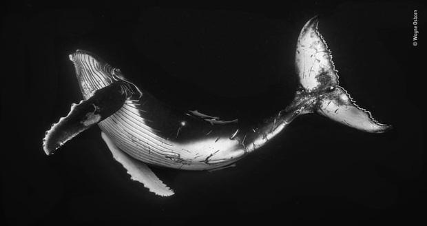 Chiêm ngưỡng những đề cử ấn tượng dành cho giải thưởng nhiếp ảnh thế giới hoang dã của năm do Bảo tàng Lịch Sử Tự Nhiên lựa chọn - Ảnh 20.