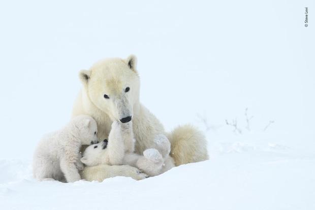 Chiêm ngưỡng những đề cử ấn tượng dành cho giải thưởng nhiếp ảnh thế giới hoang dã của năm do Bảo tàng Lịch Sử Tự Nhiên lựa chọn - Ảnh 10.