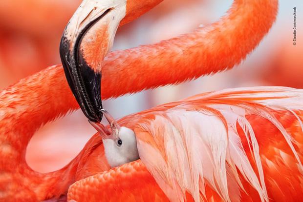 Chiêm ngưỡng những đề cử ấn tượng dành cho giải thưởng nhiếp ảnh thế giới hoang dã của năm do Bảo tàng Lịch Sử Tự Nhiên lựa chọn - Ảnh 18.
