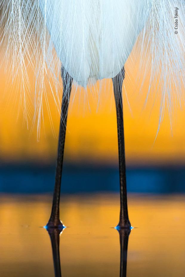 Chiêm ngưỡng những đề cử ấn tượng dành cho giải thưởng nhiếp ảnh thế giới hoang dã của năm do Bảo tàng Lịch Sử Tự Nhiên lựa chọn - Ảnh 19.