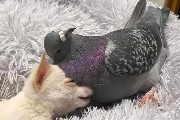 Chó không thể đi và chim bồ câu không thể bay, hai con vật đồng cảnh ngộ cùng nhau chia sẻ tình bạn ấm áp tại trung tâm cứu hộ - Ảnh 3.