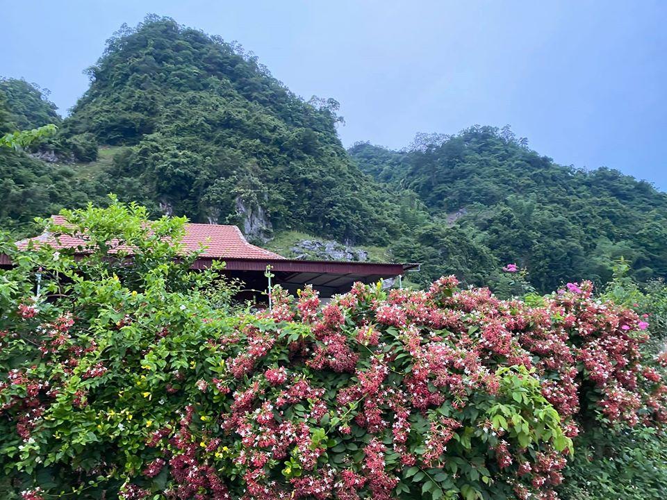Quá áp lực và mệt mỏi với cuộc sống ở Hà Nội, vợ chồng trẻ quyết bỏ công việc ổn định, mang 200 triệu lên bản Áng Mộc Châu mua đất, xây nhà, làm vườn sống an yên - Ảnh 12.