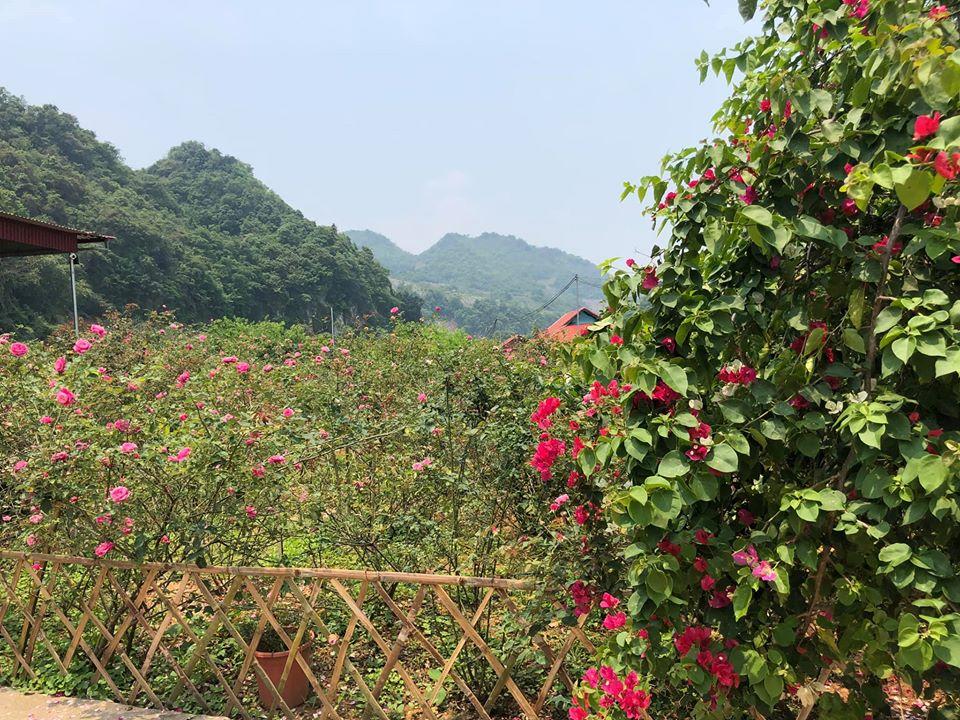 Quá áp lực và mệt mỏi với cuộc sống ở Hà Nội, vợ chồng trẻ quyết bỏ công việc ổn định, mang 200 triệu lên bản Áng Mộc Châu mua đất, xây nhà, làm vườn sống an yên - Ảnh 7.