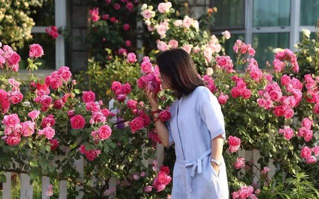 Ngôi nhà hoa hồng ở thị trấn nhỏ của cô gái dành cả thanh xuân chỉ để trồng  hoa làm đẹp nhà