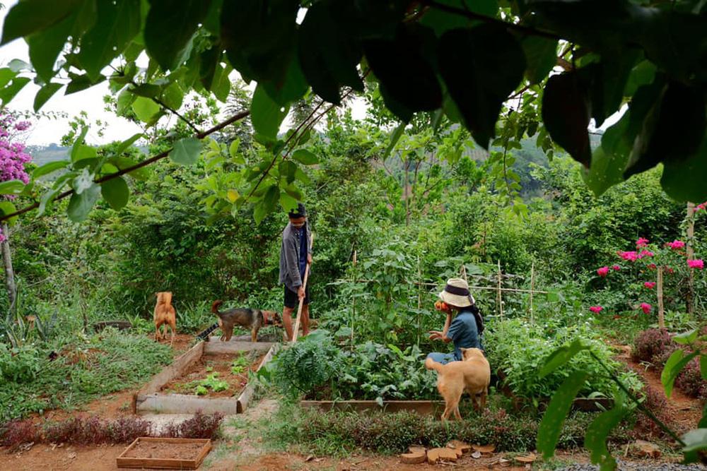Những mẩu chuyện chưa kể của đôi vợ chồng trẻ bỏ phố về rừng: Không phải ai sinh ra cũng để trồng rau, nuôi cá - Ảnh 5.