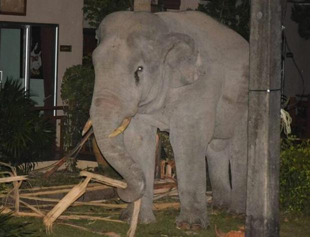 Mò vào nhà dân tìm đồ ăn, chú voi nặng 4 tấn bị mèo con rượt đuổi chạy tóe khói - Ảnh 2.