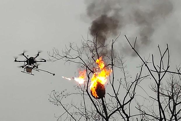 Bị ong vò vẽ đốt quanh năm, dân làng góp 300 triệu đồng chế máy bay phun lửa đốt lại tổ của chúng - Ảnh 2.