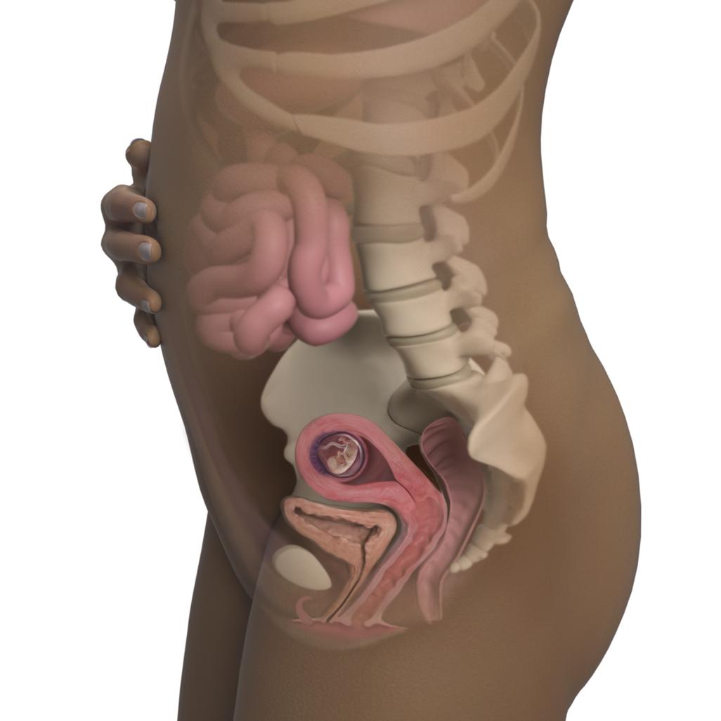 Mang thai tuần 11: Em bé đang khá bận rộn với việc đá, co giãn đôi chân