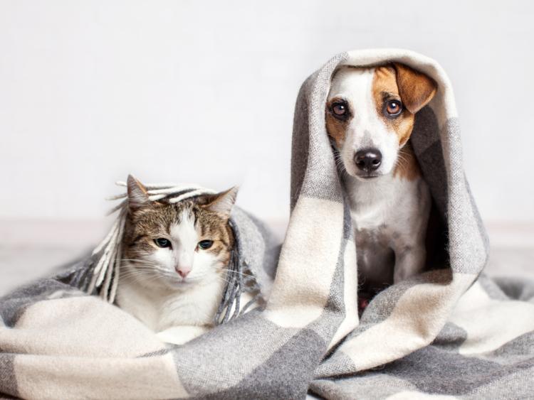 Cặp đôi cùng ngắm ảnh động vật sẽ yêu thương nhau hơn
