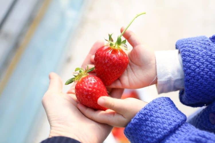 5 tác dụng của dâu tây đối với sức khỏe bà bầu