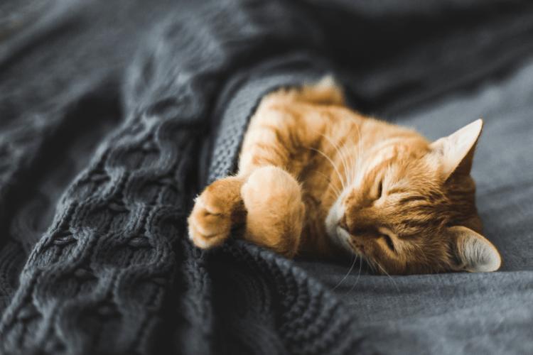 Hội chứng ngủ li bì: Liệu có cách chữa trị?