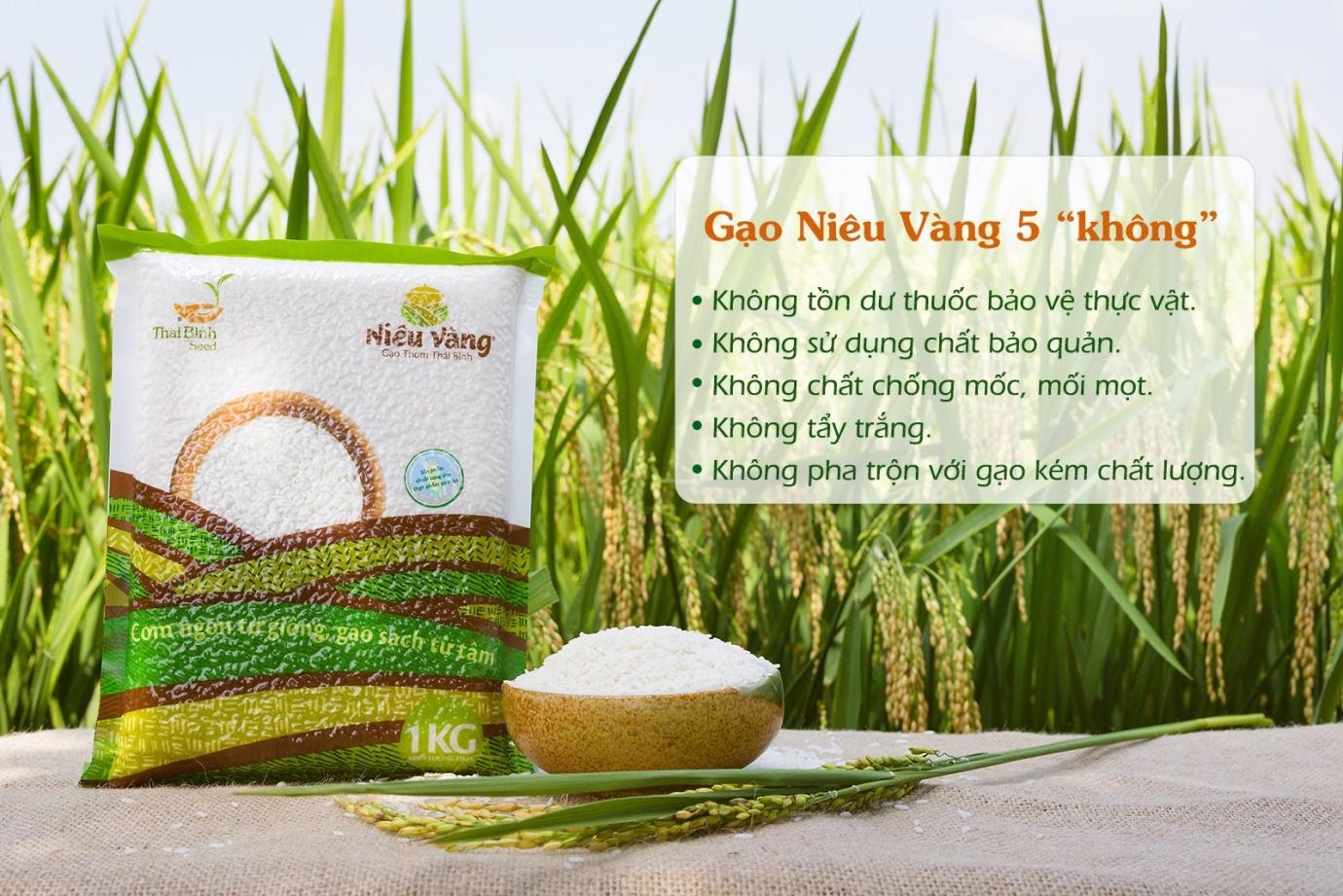 Gạo niêu vàng: Gạo sạch nguyên chất từ phòng thí nghiệm tới bàn ăn